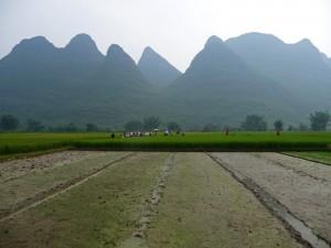 Rizières Yangshuo