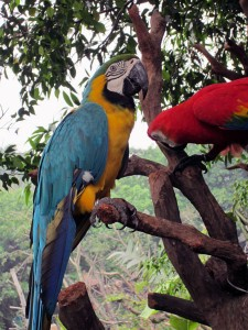 Perroquet Safari Park Guangzhou