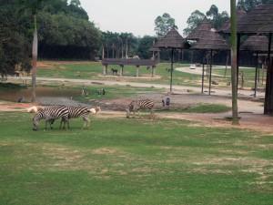 Zèbres Safari Park