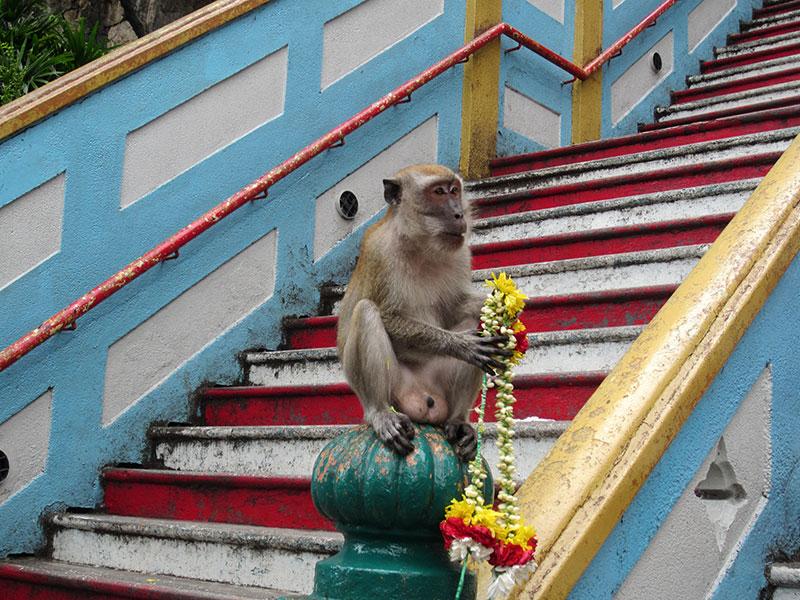 macaque marche battu cave