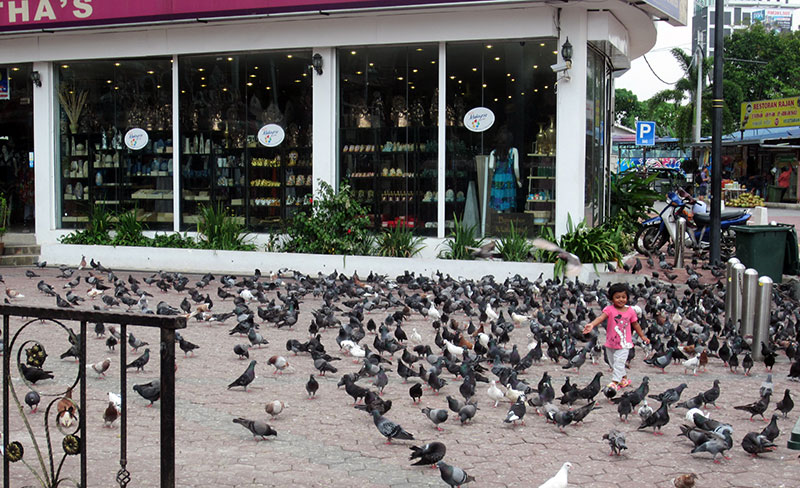 pigeons battu cave