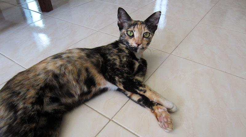 maggie chat thailande