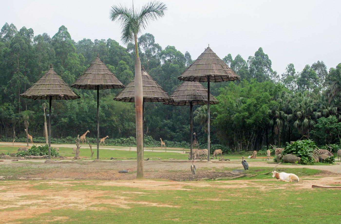Safari Park Guangzhou